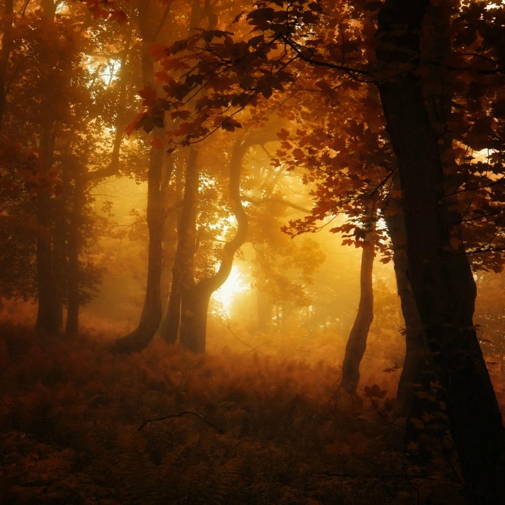 тушка сказочная осень фото ночному городу