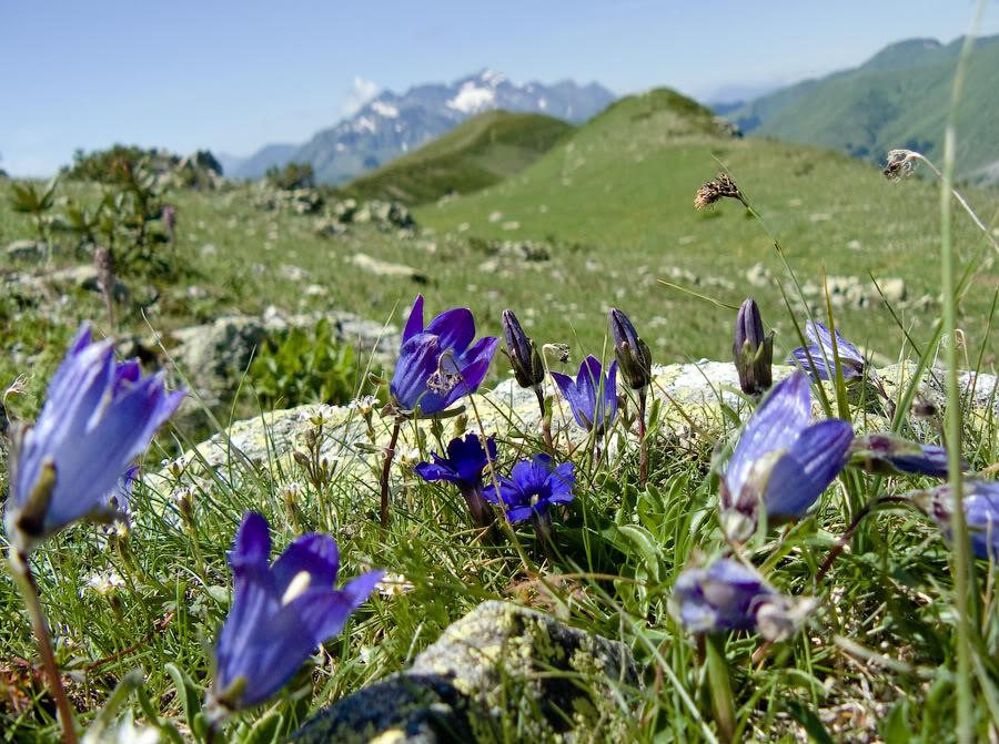 выглядели горные цветы краснодарского края фото названия его