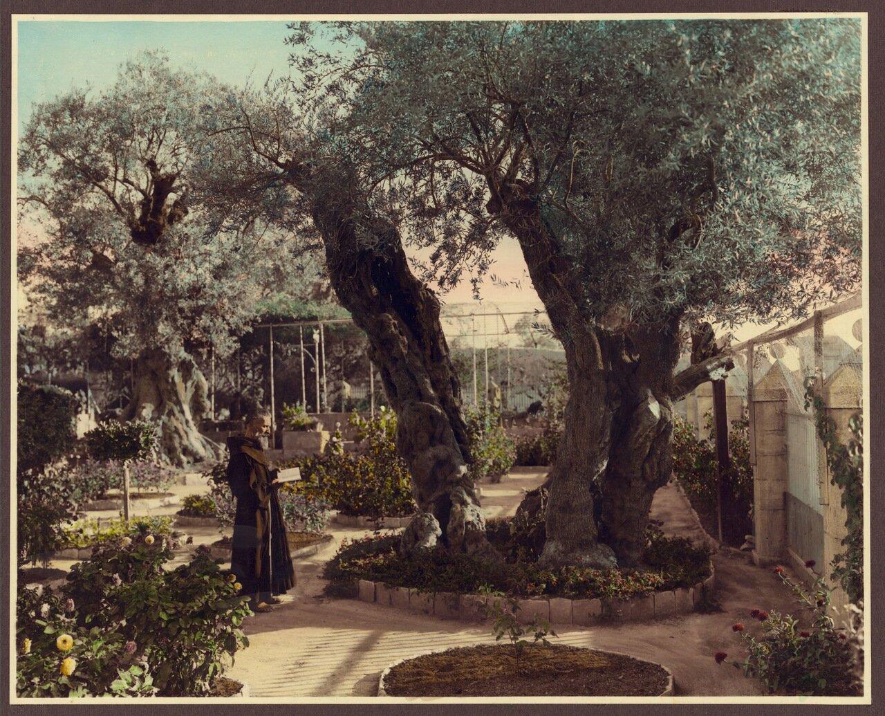 Монах с книгой, Гефсиманский сад, Иерусалим