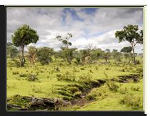 Кения. Масаи Мара. Фото muha555 - Depositphotos
