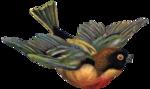 nb_vp_bird1.png