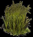 Lug_Grass_Flower (73).png