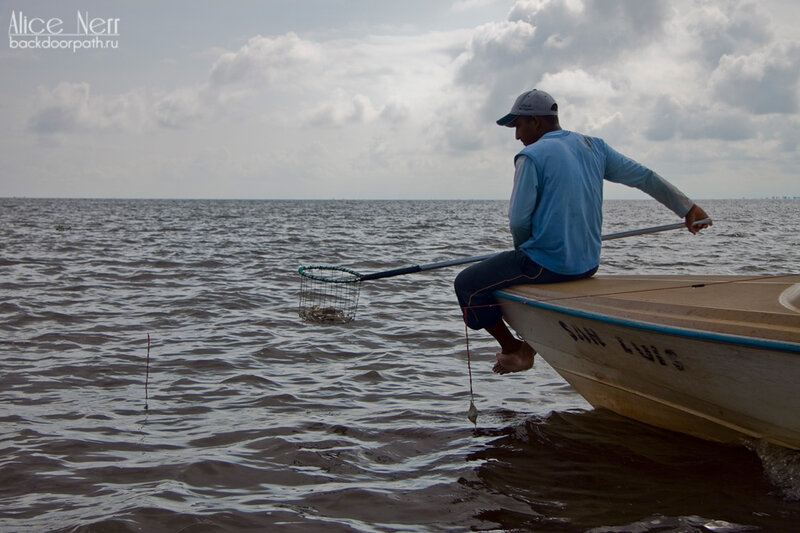 процесс ловли голубых крабов на озере марокайбо, венесуэла
