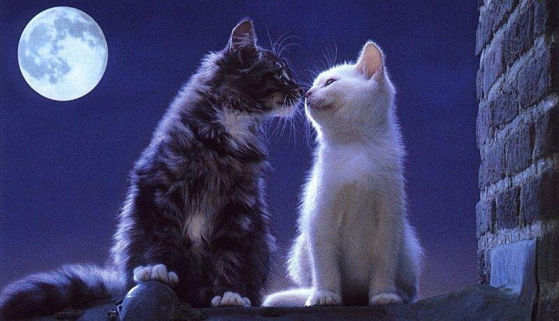 Обои, картинки котят с надписью о любви