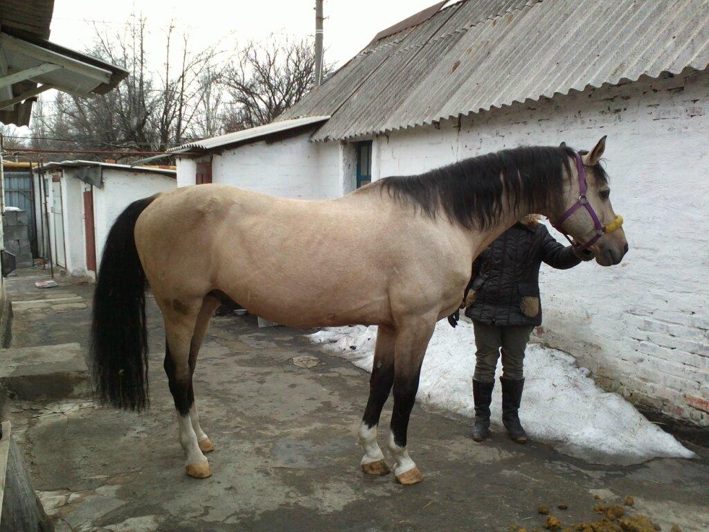 http://img-fotki.yandex.ru/get/4126/191118421.4/0_f9823_92dc4017_XXL.jpg