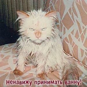 http://img-fotki.yandex.ru/get/4126/194408087.0/0_8db64_767b5320_XL.jpg