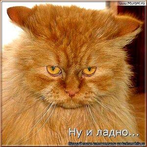 http://img-fotki.yandex.ru/get/4126/194408087.2/0_921f8_4d026a68_M.jpg