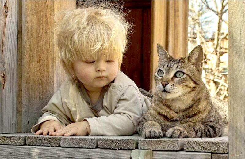 Как узнать сколько кошке лет