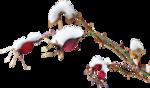 ldavi-feathersandmittens-snowyrosehipcluster.png
