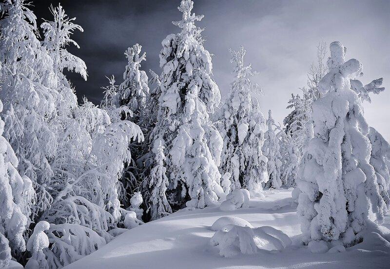 Зимний монохром
