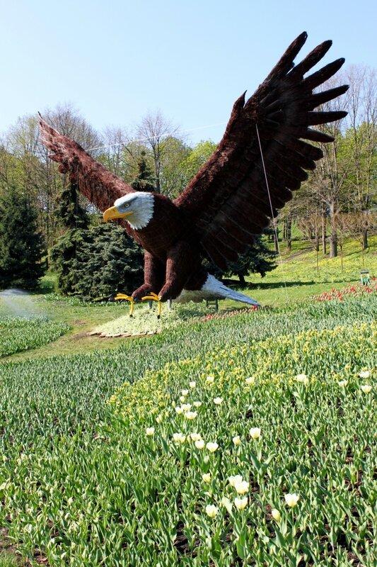 Топиарный орел на Певческом поле