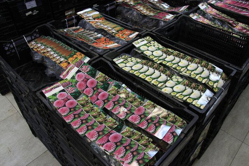 Луковичные и многолетники уже в наших магазинах!