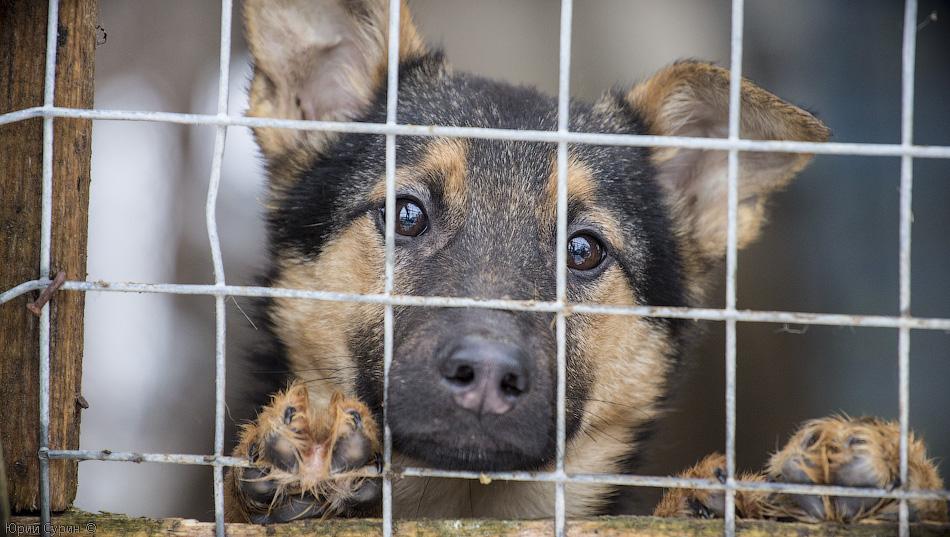Тверской приют для собак