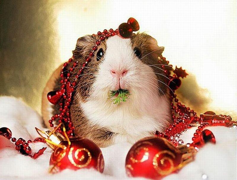 Картинки марта, смешные картинки животных с новым годом