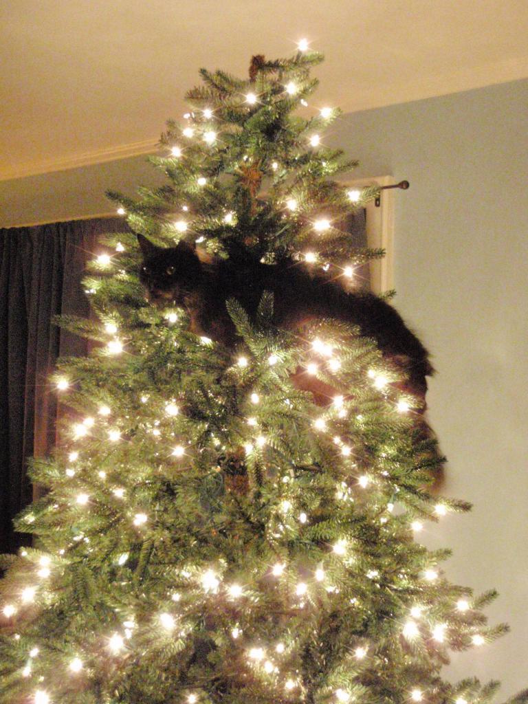 Коты на ёлке - фото 2