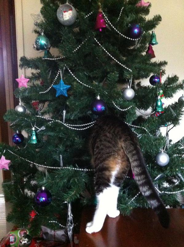 Коты на ёлке - фото 35