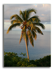 Сейшелы. О. Фрегат.  Fregate Island. Seychelles. Фото Elena Kramarenko - Depositphotos