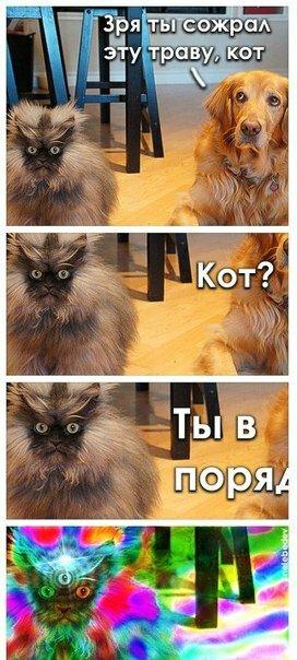 кот ты в порядке
