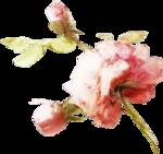ldavi-heartwindow-rose7.png