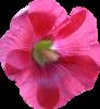 Скрап-набор Crazy Pink 0_b8be1_fbffc674_XS