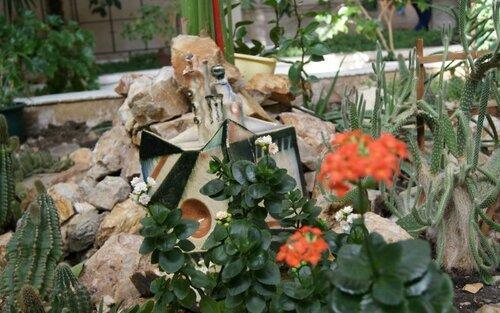 Экспонаты ботанического сада (02.04.2013)