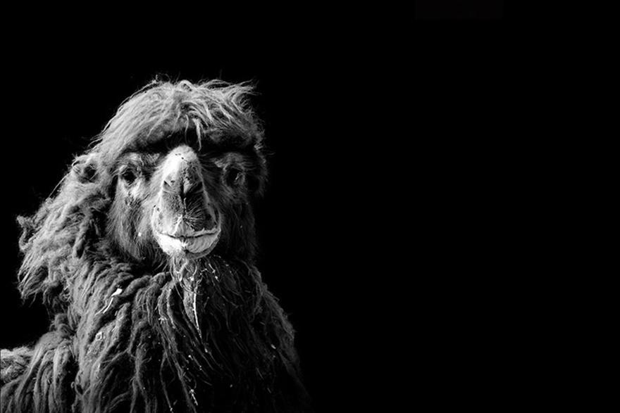 Лукас Холас. Черно белые портреты животных 0 1419c8 8fe0e0c3 orig