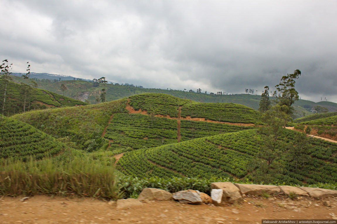 Шри-Ланка_Чайный замок_09