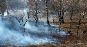 Весной горит сухая трава