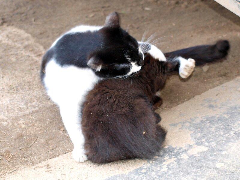 Кошки и котята спасателей P4281389.jpg