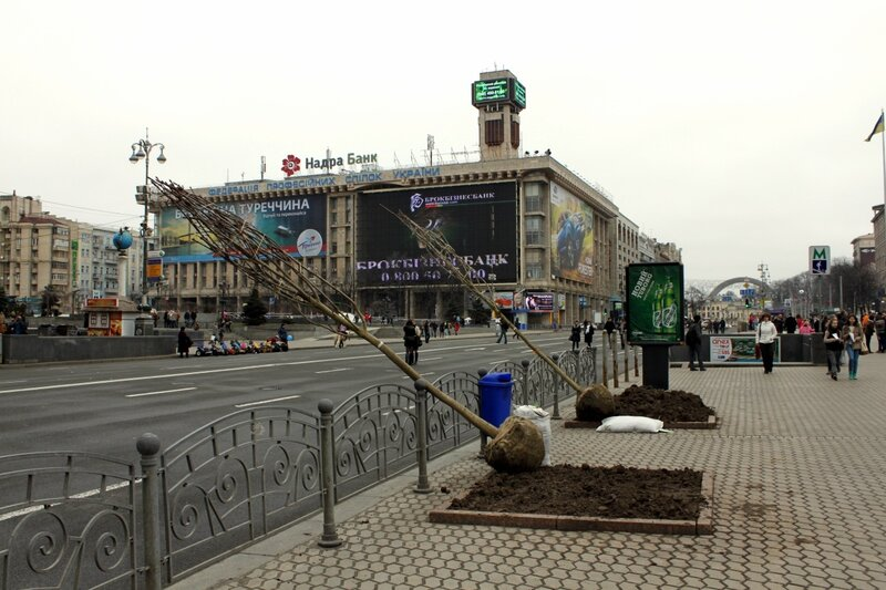 Новые каштаны на Майдане Незалежности