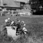 Фото Маргарита Федина. Hasselblad 500C/M, монокль 110 мм