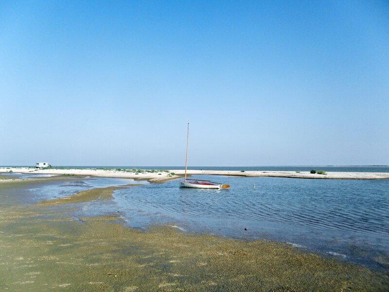Летним утром на песчаном берегу