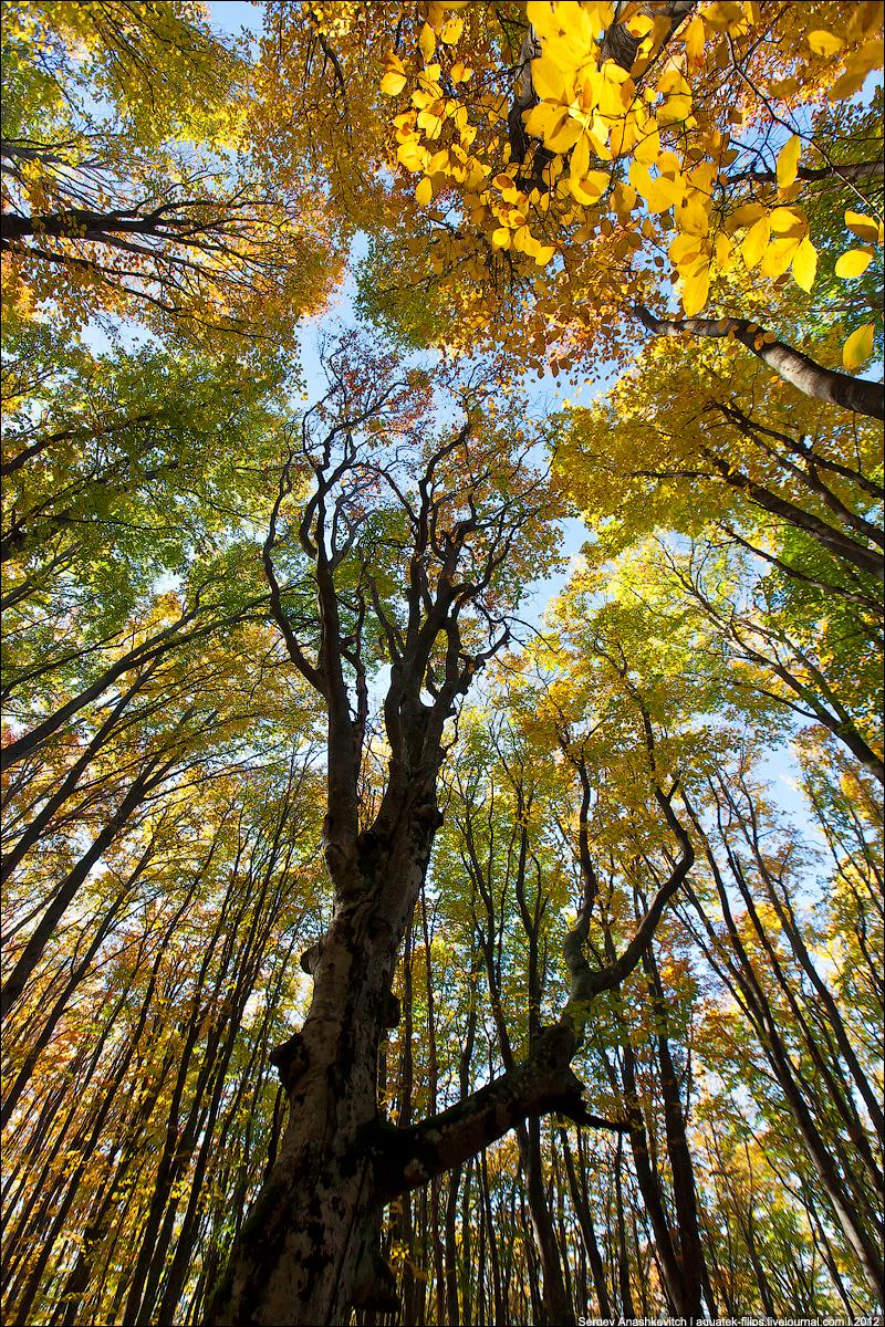 Осень на Чатыр-Даг