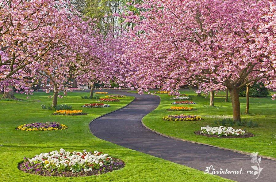 Весенний сад в Англии..
