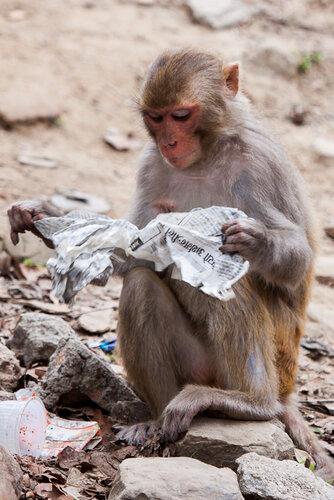 Читатель Непала