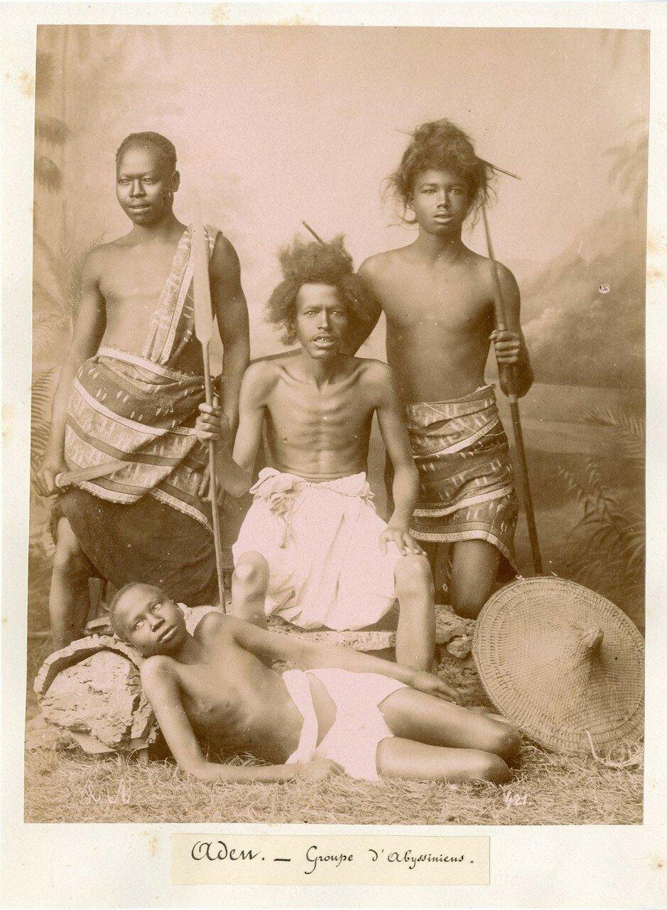 Группа абиссинцев