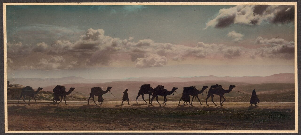 Караван верблюдов