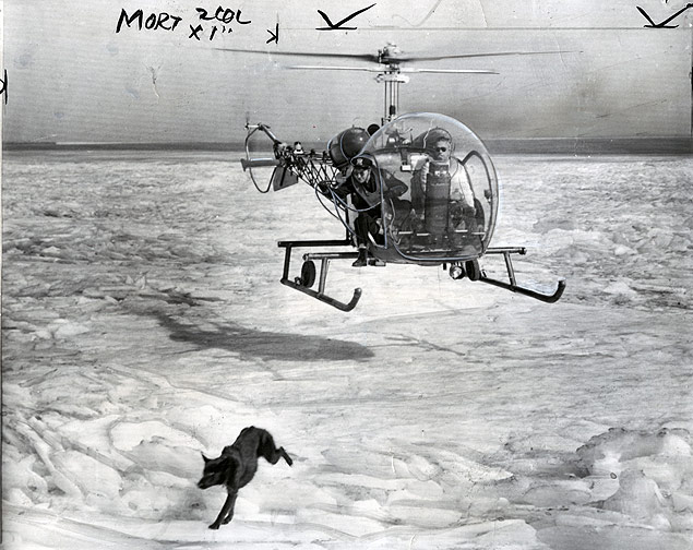 German shepherd that had been stranded for two days on a Lake Michigan ice floe on the Chicago, Illinois, lakefron
