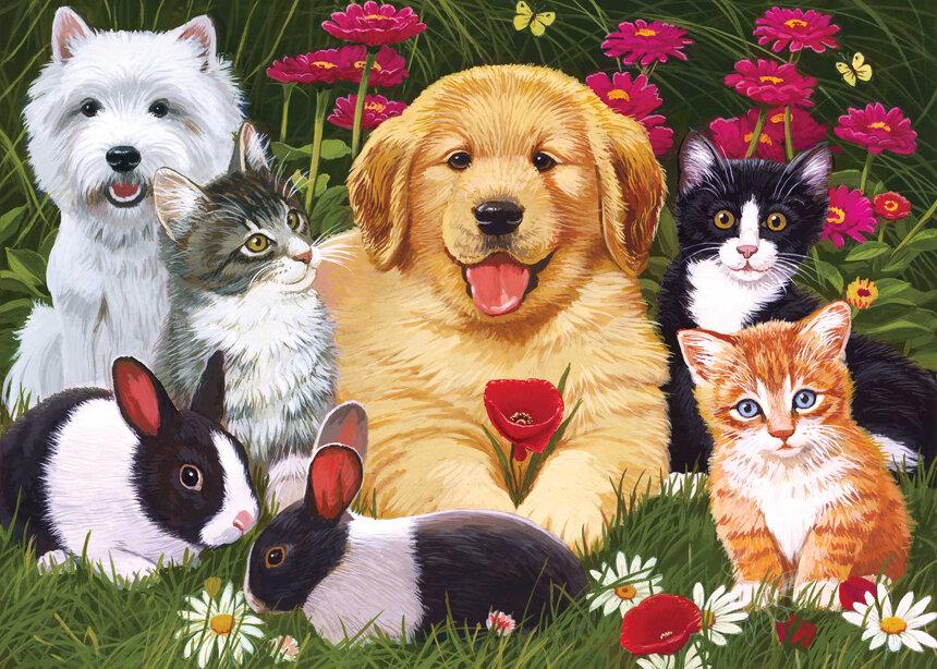 Открытки собаками кошками, открытки день рождения