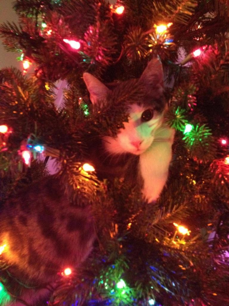 Коты на ёлке - фото 9