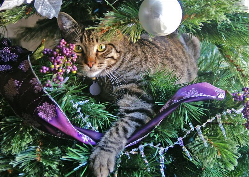 Коты на ёлке - фото 36