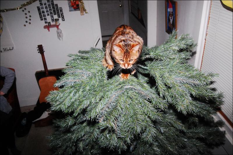 Коты на ёлке - фото 40
