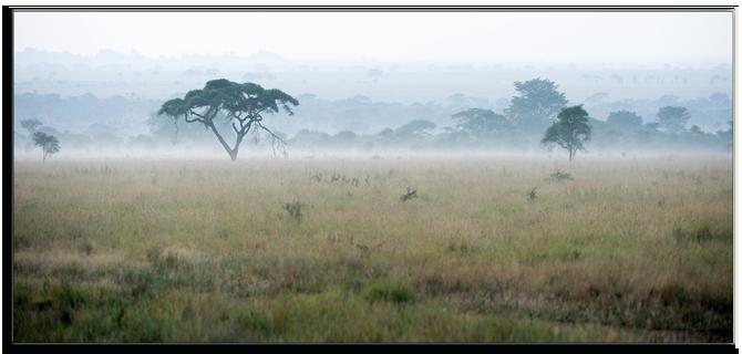 Кения. Раннее утро в Масаи Мара. Фото Surzet Depositphotos