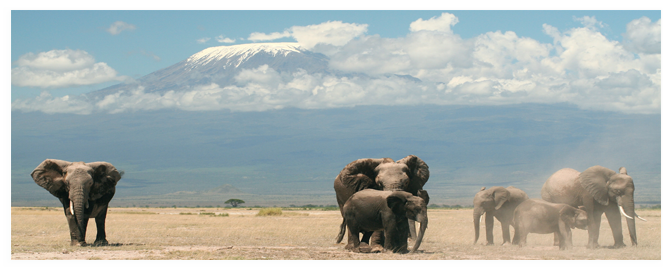 A herd of elephants in Amboseli National Park, Kenya. Mount Kilimanjaro is in the background. Фото graemes - Depositphotos