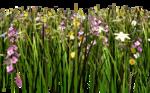 Lug_Grass_Flower (19).png