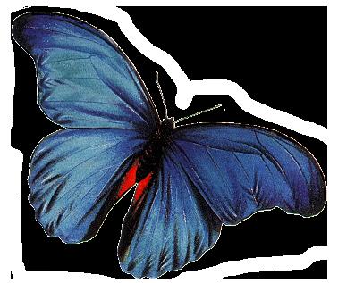 Бабочки кира скрап