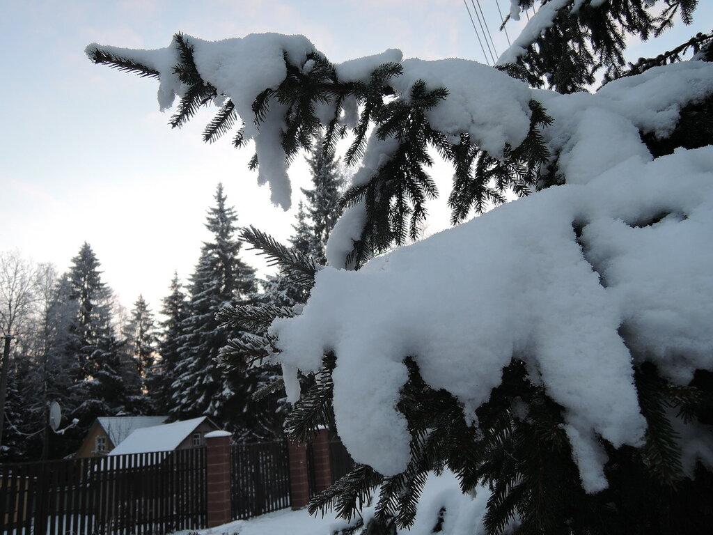 Утро. Снег.