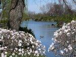 Spring (17).jpg
