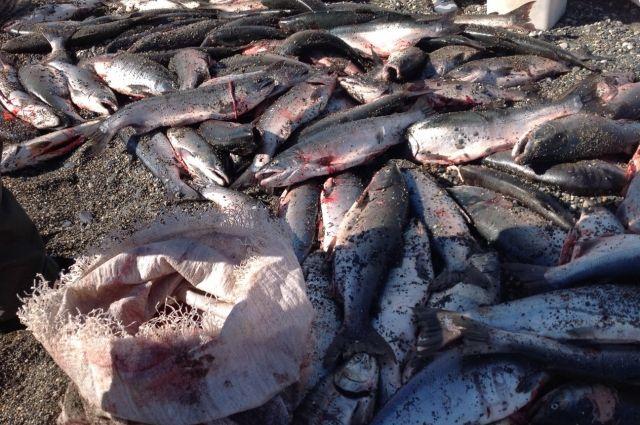 РФ ограничит поставки рыбы изИсландии