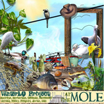 At The Mole